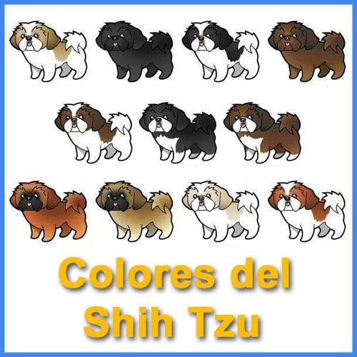 colores de perros shih tzu