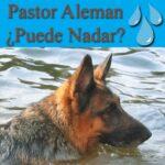 ¿Los pastores alemanes pueden nadar?