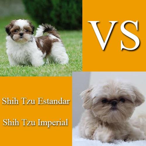 diferencia entre shih tzu imperial y normal