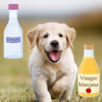 vinagre de manzana para hongos en perros