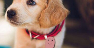 sintomas de que un perro tiene lombrices