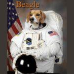 ventajas y desventajas de un perro beagle
