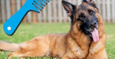 mi perro pastor aleman suelta mucho pelo